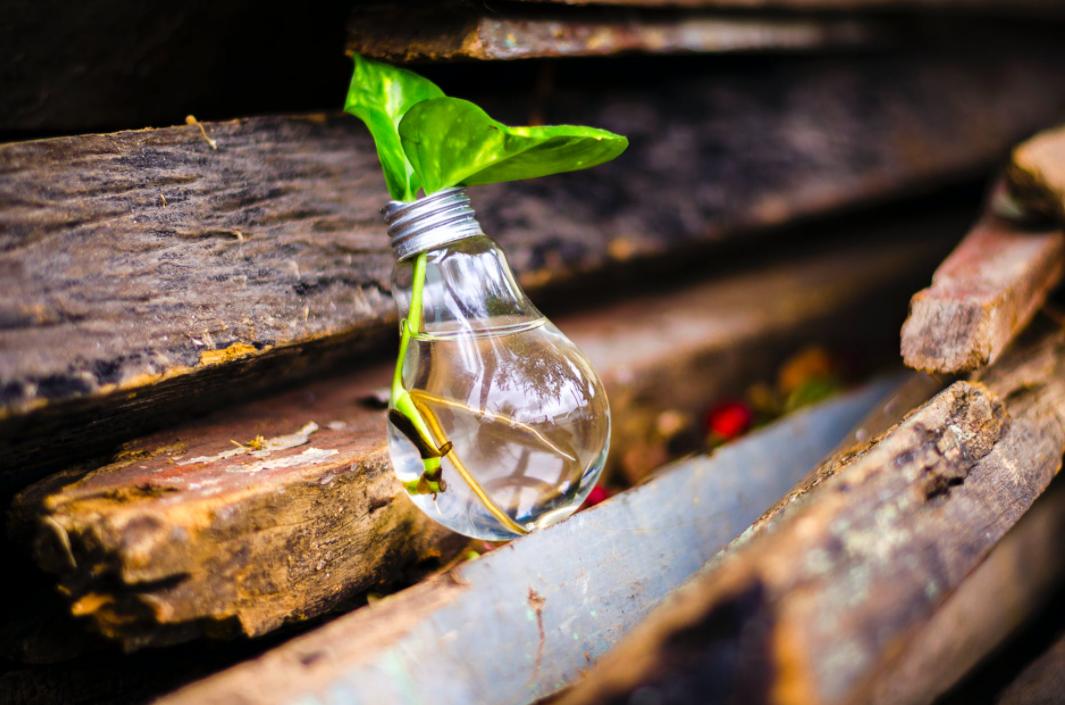 La necesidad de innovar: el caso de las firmas de servicios profesionales